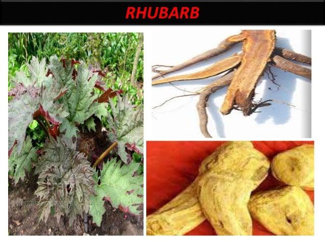 Rhubarb synonym East indian rhubarb, China rhubarb, Turky rhubarb BS it consist of peeled dried rhizomes and roots of Rheu...