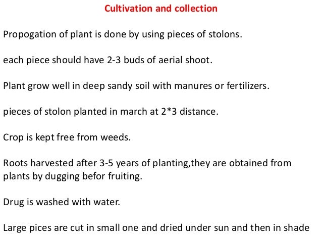 Cultivation and collection Propogation of plant is done by using pieces of stolons. each piece should have 2-3 buds of aer...