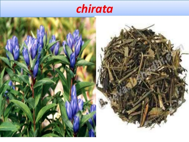 Chemical constituents Chiritin, gentiopicrin, amarogentin, ophelic acid, gentinine, gentiocrucine