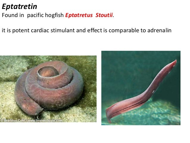 D(-) OCTOPAMINE found in Octopus Macropus, O. vulgaris. it produce adnergic and cardiovascular response