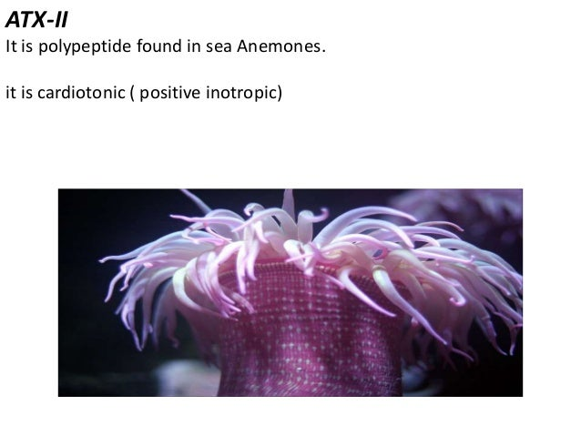 Spogosine It is methoxy derivative of adenosine. Found in caribbean sponge Crypotethia crypta. it reduces rate and force o...