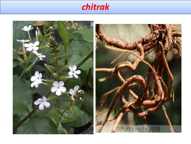 Marketed formulation ingredient of j p liver syrup-jamuna pharma Piles care, mansulate-chitryu Chitrakadi bati avajeha- ba...