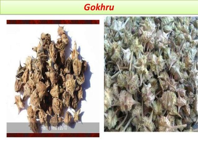 Marketed formulation Ingredient of Bonnisan, confido, himplasia,renalka- himalya, dhatupaushtik churna- baidyanath, sement...