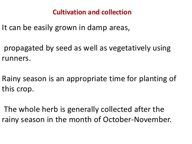 Cultivation and collection It can be easily grown in damp areas, propagated by seed as well as vegetatively using runners....