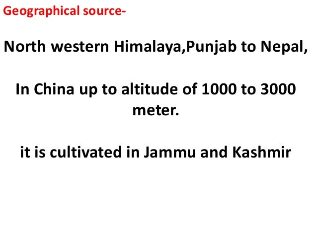 Geographical source- North western Himalaya,Punjab to Nepal, In China up to altitude of 1000 to 3000 meter. it is cultivat...