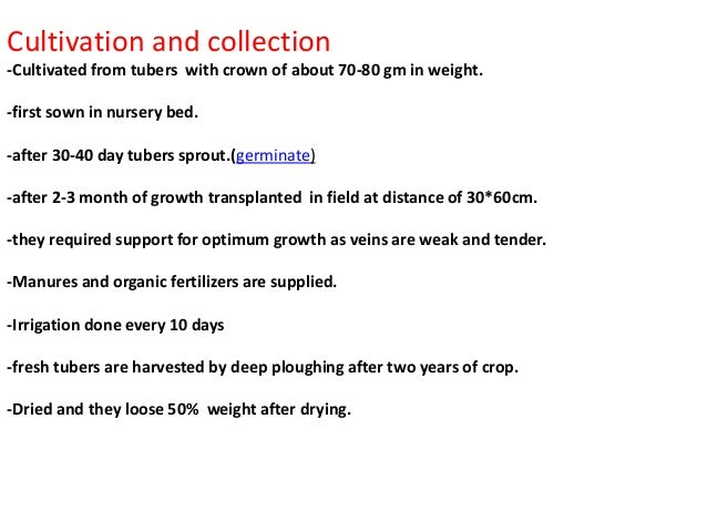 Cultivation and collection -Cultivated from tubers with crown of about 70-80 gm in weight. -first sown in nursery bed. -af...