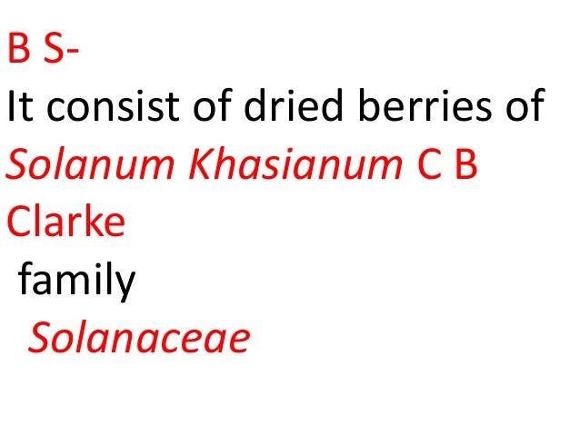B S- It consist of dried berries of Solanum Khasianum C B Clarke family Solanaceae