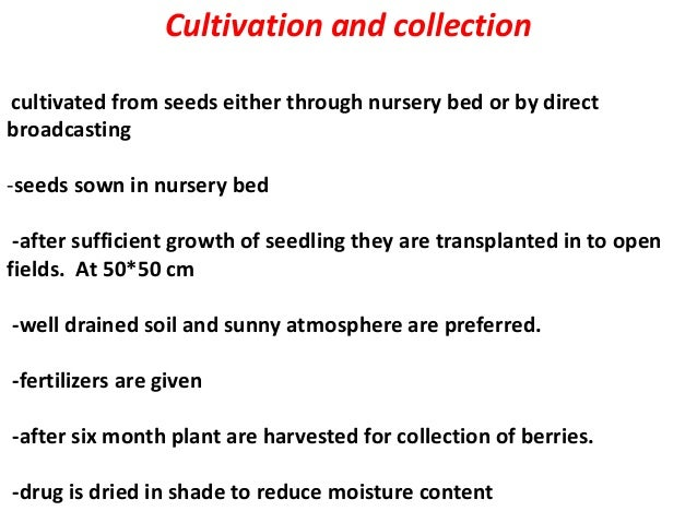 Cultivation and collection cultivated from seeds either through nursery bed or by direct broadcasting -seeds sown in nurse...