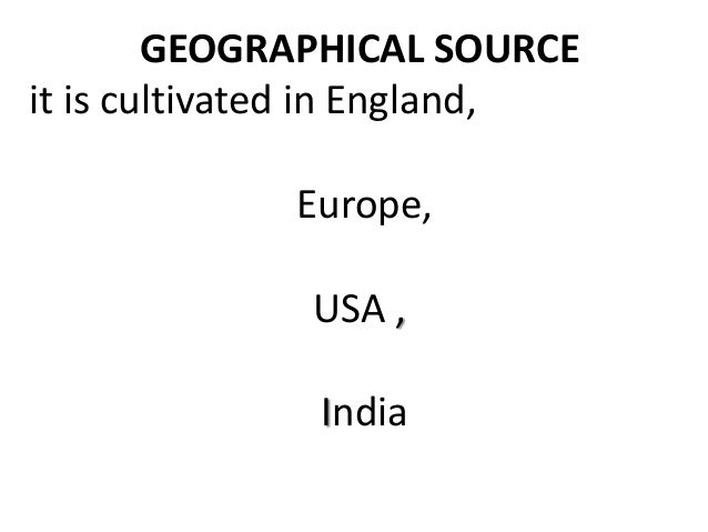 GEOGRAPHICAL SOURCE it is cultivated in England, Europe, USA , India