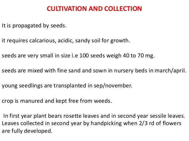 CULTIVATION AND COLLECTION It is propagated by seeds. it requires calcarious, acidic, sandy soil for growth. seeds are ver...