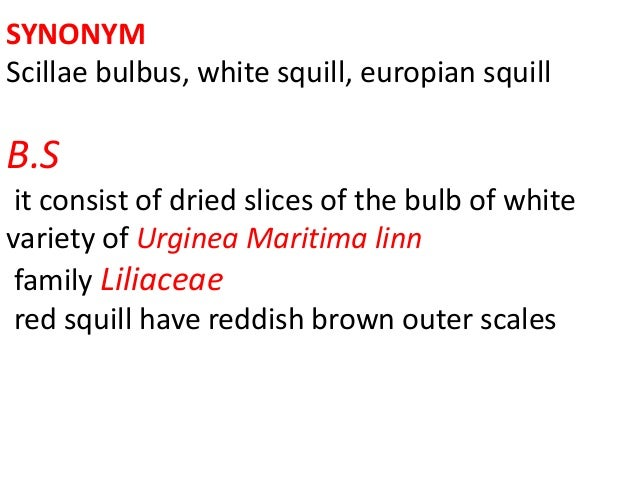 SYNONYM Scillae bulbus, white squill, europian squill B.S it consist of dried slices of the bulb of white variety of Urgin...