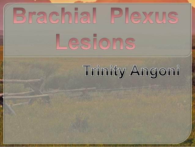  At the root of the neck, the nerves form acomplicated plexus called the brachial plexus. This allows the nerve fibers d...