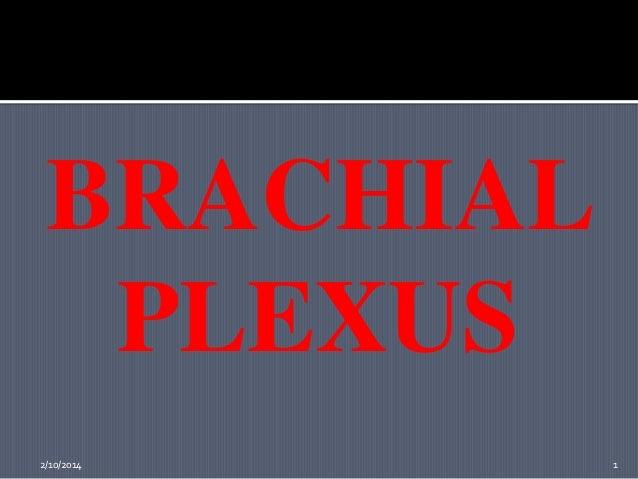 BRACHIAL PLEXUS 2/10/2014  1
