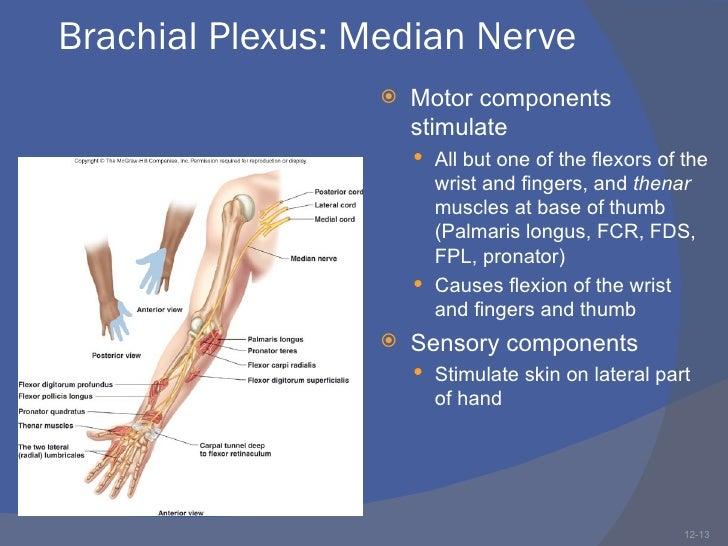 Brachial Plexus Injuries 12335691