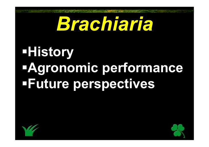 Brachiaria History Agronomic performance Future perspectives
