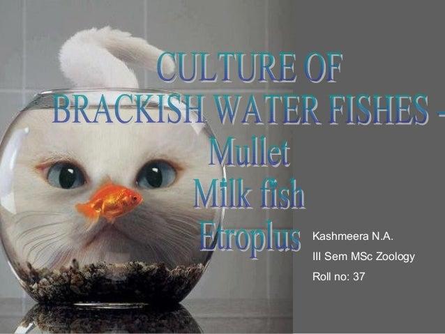 Kashmeera N.A.III Sem MSc ZoologyRoll no: 37