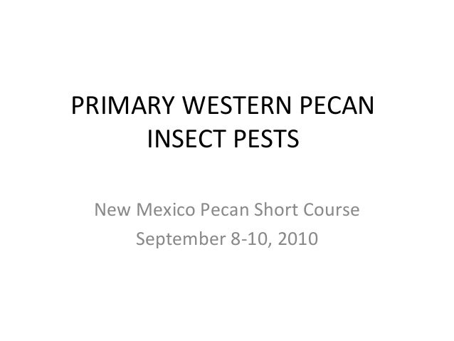 PRIMARY WESTERN PECAN INSECT PESTS New Mexico Pecan Short Course September 8-10, 2010