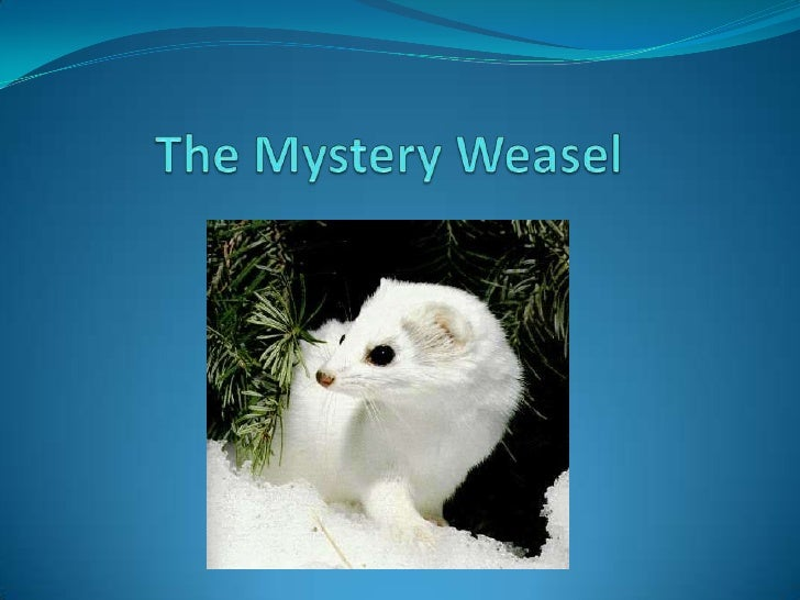 The Mystery Weasel<br />