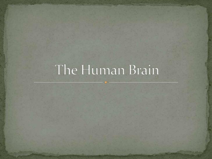 Brain Slide 2