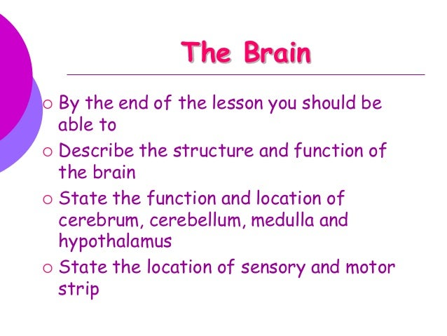 The Brain         By the end of the lesson you should be able to Describe the structure and function of the brain Stat...