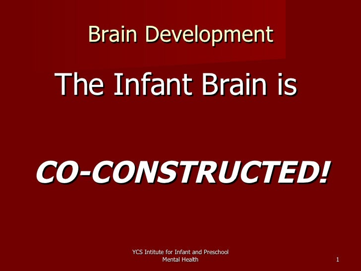 Brain Development <ul><li>The Infant Brain is  </li></ul><ul><li>CO-CONSTRUCTED! </li></ul>YCS Intitute for Infant and Pre...