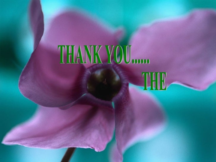 THANK YOU...... THE END...