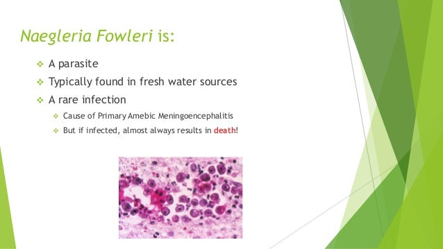 the dangers of the amoebic parasite naegleria fowler Parasites — naegleria fowleri — primary amebic meningoencephalitis (pam)  naegleria fowleri causes the disease primary amebic meningoencephalitis  naegleria fowleri is commonly found.