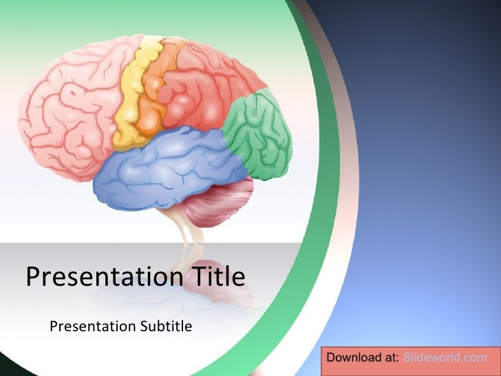 Brain anatomy powerpoint template for Anatomy ppt templates free download