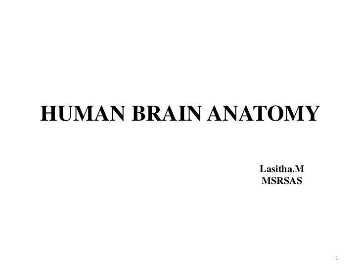 HUMAN BRAIN ANATOMY              Lasitha.M              MSRSAS                          1