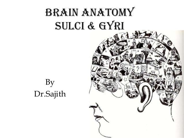 Brain Anatomy Sulci & Gyri  By Dr.Sajith