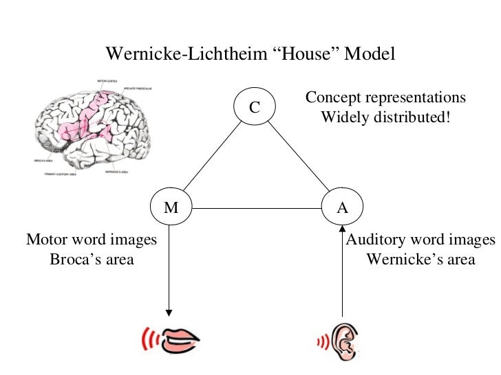 Brain and aphasia arcuate fasciculus 20 wernicke lichtheim house model ccuart Image collections