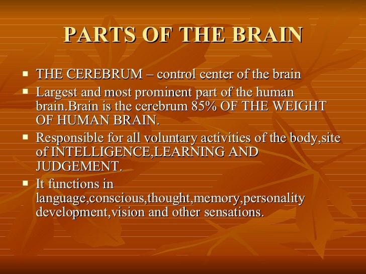 Brain and five senses parts of the brain ccuart Images