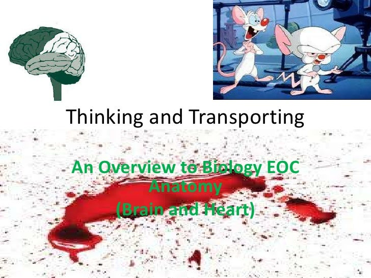 Thinking and TransportingAn Overview to Biology EOC        Anatomy    (Brain and Heart)