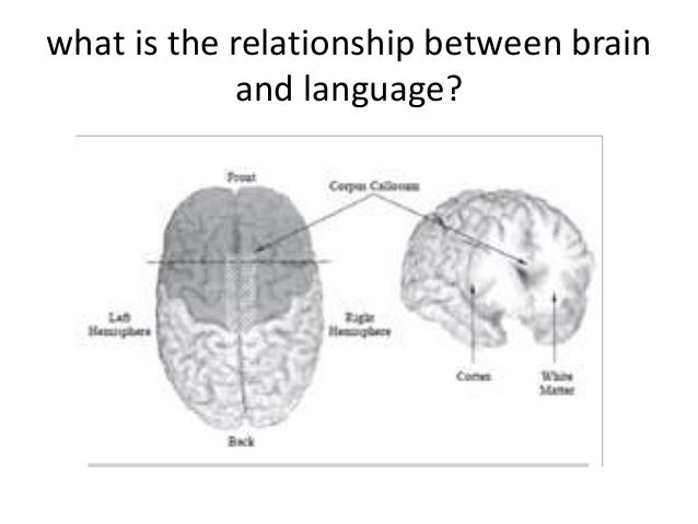 what is the relationship between brain and language?