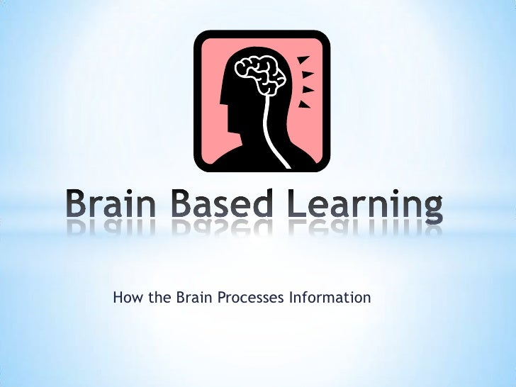How the Brain Processes Information