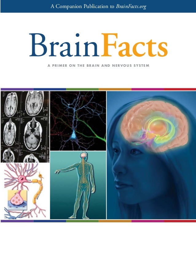 A Companion Publication to BrainFacts.org  A PRIMER ON THE BRAIN AND NERVOUS SYSTEM