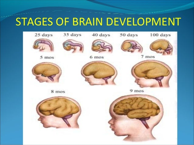 Teenage developmental stages