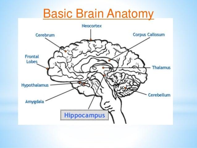 Brain Matters March 5 Inservice