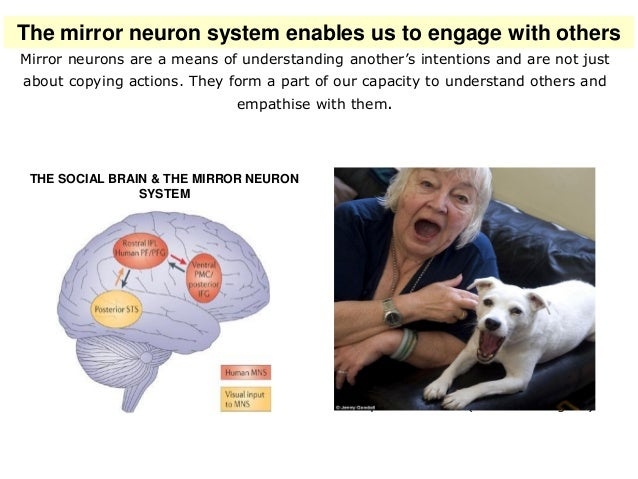 Science, 325, 5938, 284, 2009. Empathy is facilitated when we share attention. The social brain and the mirror neuron syst...