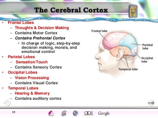 Brain parts near pod session