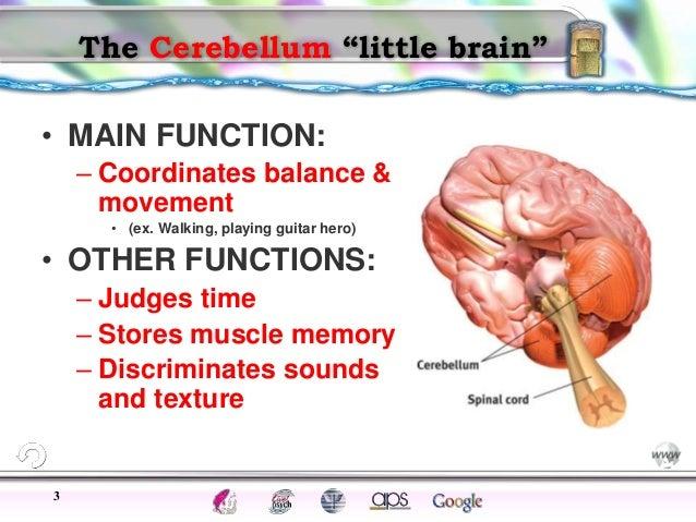 brain parts near pod session, Sphenoid