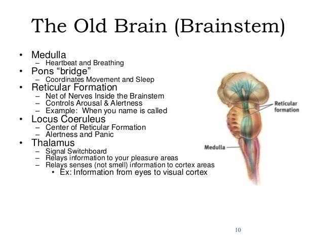 Vitamins to improve memory and brain function photo 2
