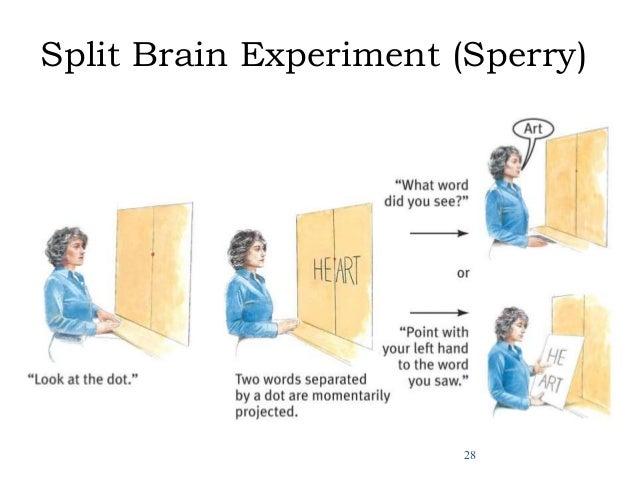 Sperry Split Brain Experiments by Matthew