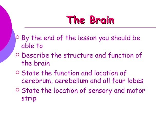 The Brain   By the end of the lesson you should be    able to   Describe the structure and function of    the brain   S...
