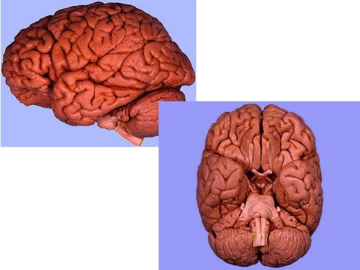 Brain Practical