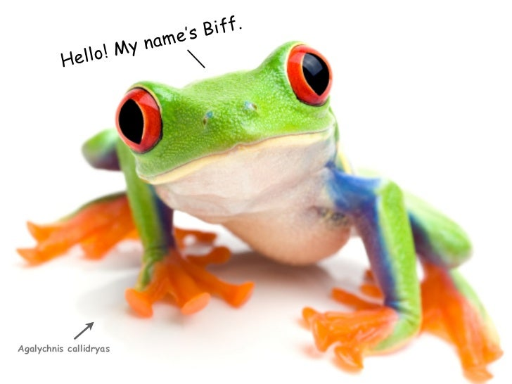 Biff.                        ame's                 ! My n           Hello     Agalychnis callidryas