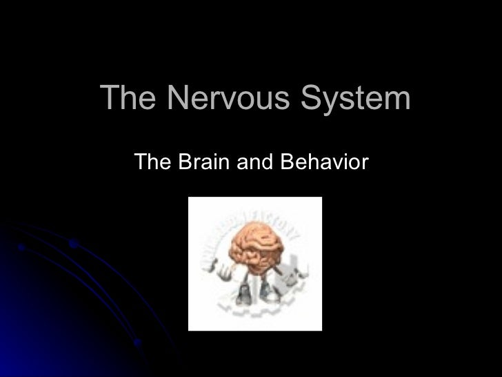 The Nervous System The Brain and Behavior