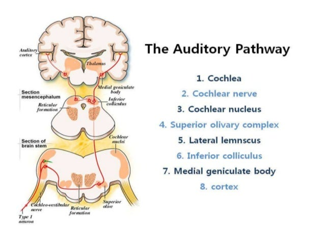 Brainstem auditory evoked responses (baer or abr