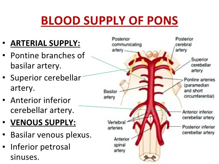 Arcus Palatopharyngeus besides Whereistheenergy further Vertebral Artery as well 2286753 in addition Development Of Foregut. on dorsal and ventral blood