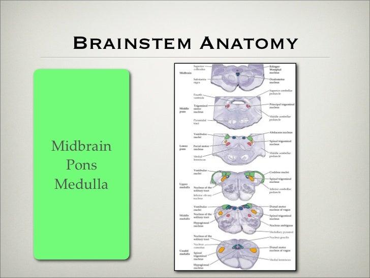 Brainstem Lesions